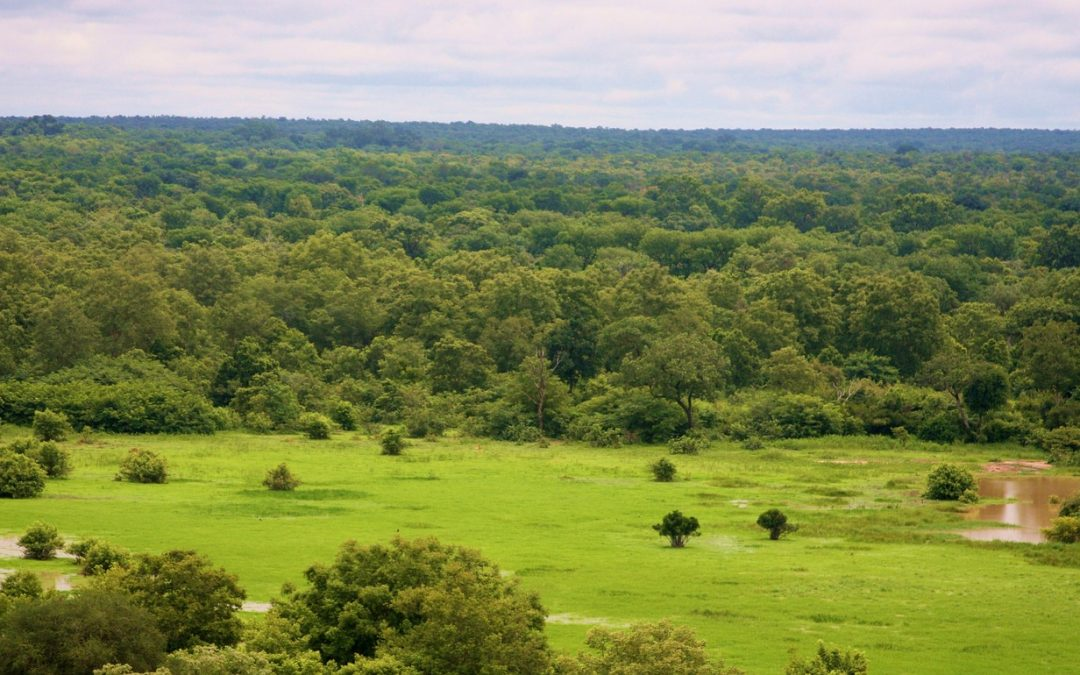 Ghana needs 100 million trees to restore depleted forests